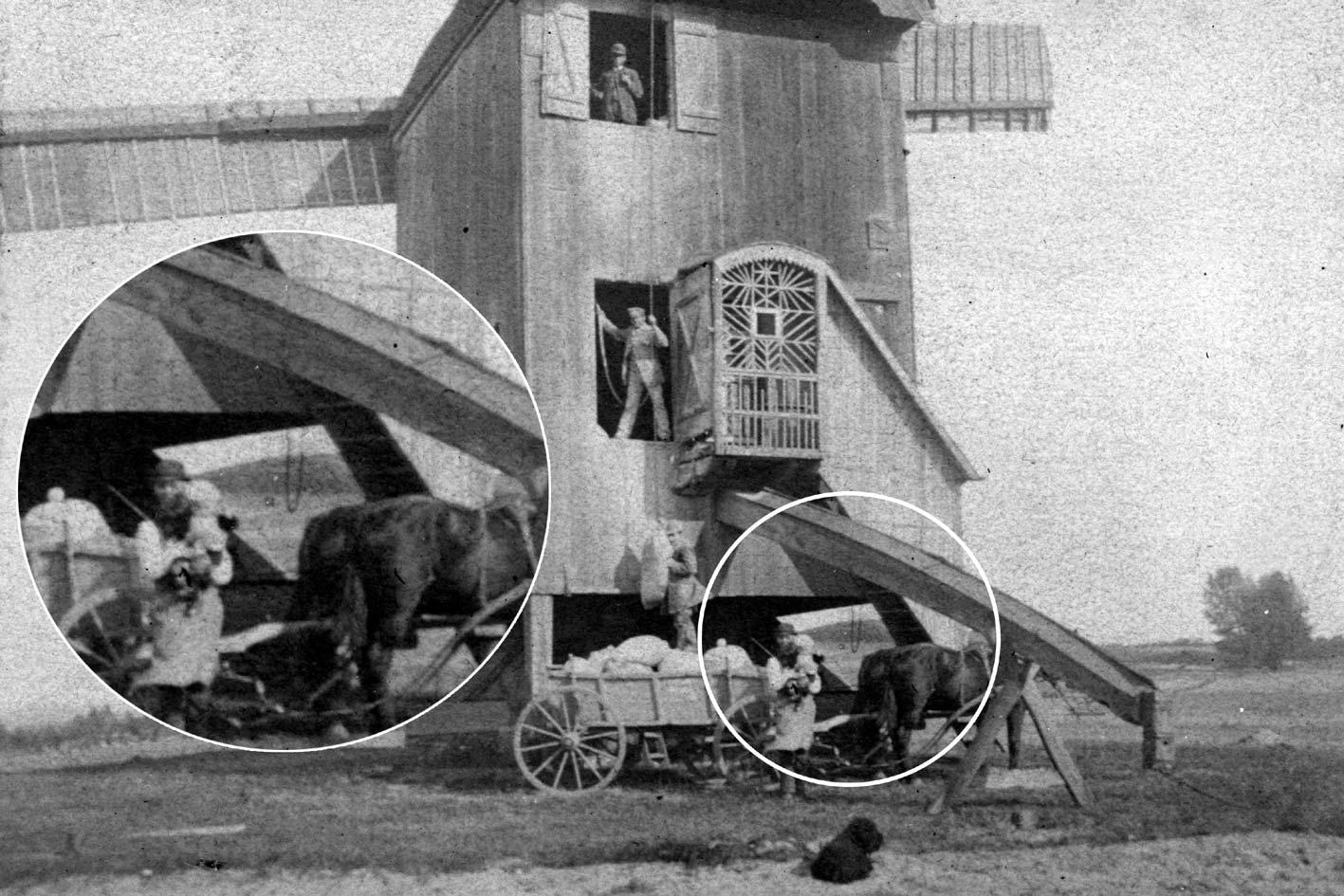 Ausschnitt aus einem Foto der Windmühle des Müllers Schwach im Frühjahr 1891. Die Blickrichtung ist etwa nach Osten. Zwischen dem Schwiegervater des Müllers Schwach, der seinen Sohn Arthur auf dem Arm hält, und den Hinterteilen der Pferde kann man durch den Unterbau der Mühle hindurch blicken. Im Hintergrund ist der Spitzberg erkennbar und es wird deutlich, wie zutreffend dieser Name war. Der gesamte Bereich um den Spitzberg war damals unbewaldet. [OLM F0848LF]