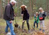 Baumkönigin, Esskastanie, Baum des Jahres 2018, Tempelwald