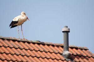 Storch über dem Spargelhof Märkerland
