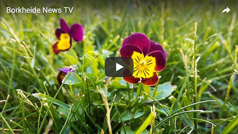 BorkheideNewsTV20180521