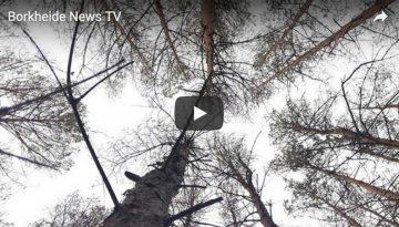 BorkheideNewsTV20180624