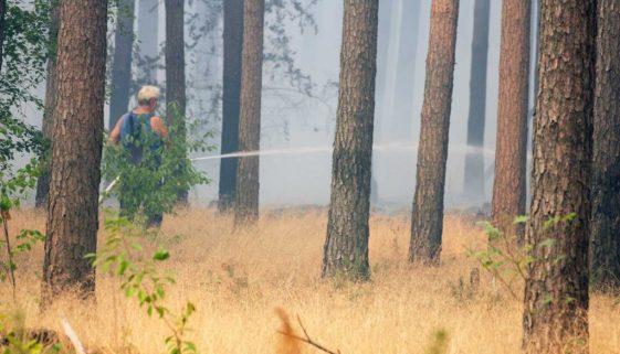 Waldbrand, Brand, Fichtenwalde, Feuerwehr