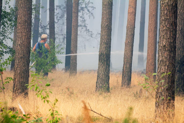 Waldbrand In Fichtenwalde