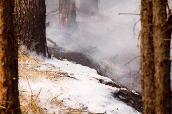 Waldbrand, Fichtenwalde, Feuerwehr