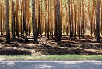 Waldbrand Emstal Busendorf