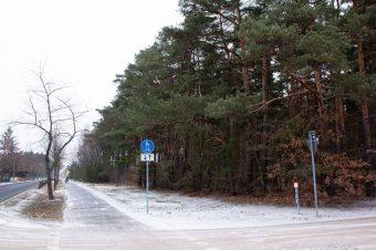 Borkheide-Wald-im-Ort