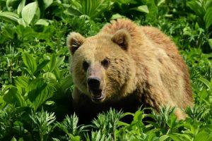 Unter Bären, Geysiren und Vulkanen im Fernen Osten Russlands (Kamtschatka)