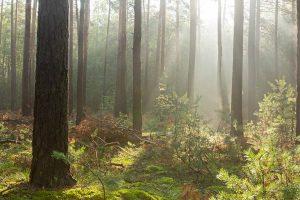 """Podiumsdiskussion zum Thema """"Zukunft unseres Waldes"""" @ Zum Deutschen Haus"""