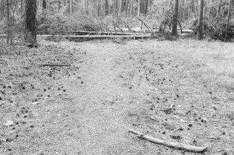 Waldarbeiten Borkwalde