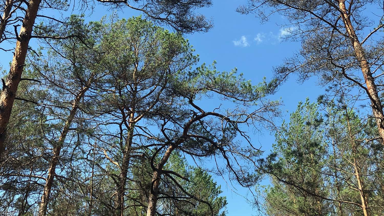 Der Wald regeneriert sich