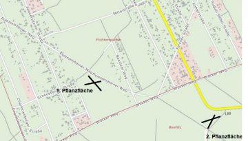 Stadt Beelitz, Fichtenwalde, NaturWald, Pflanzmaßnahme, Schule Fichtenwalde