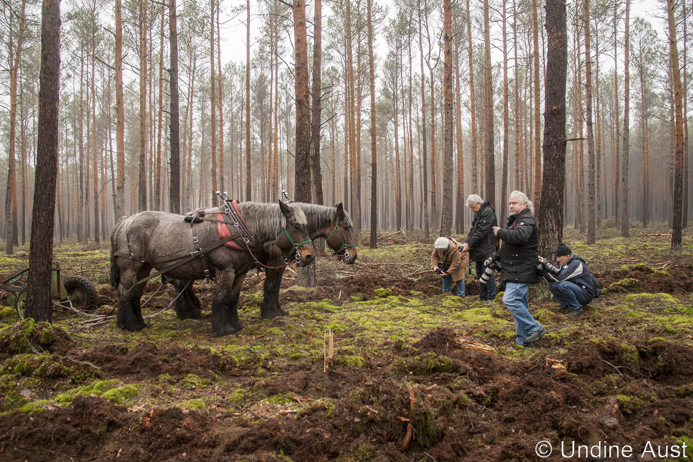 Fototermin mit den Rückepferden