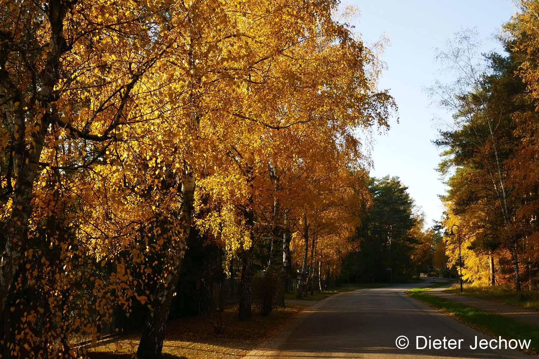 Borkwalde im Herbst