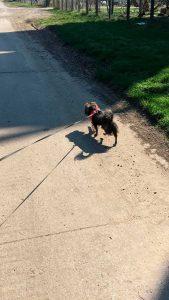 Brück hilft 2.0, Hund ausführen, Coronavirus