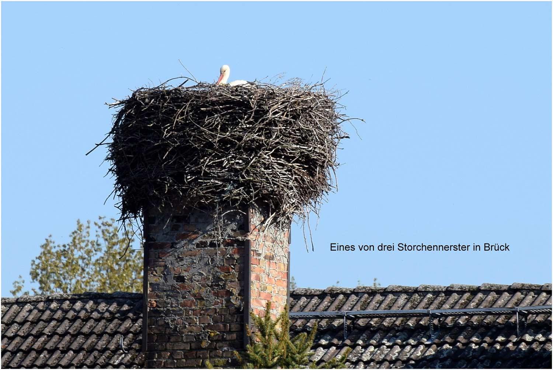 Storch-Brueck-(c)Schaldach-01
