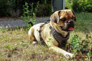 Tag-des-Mischlingshundes-Floeckchen-1