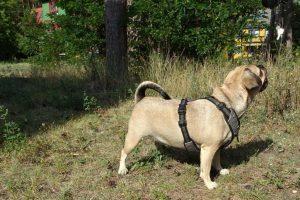 Tag-des-Mischlingshundes-Floeckchen-2