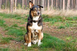 Tag-des-Mischlingshundes-Leo-1
