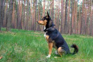 Tag-des-Mischlingshundes-Leo-2