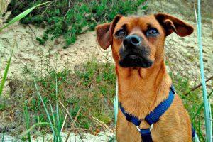 Tag-des-Mischlingshundes-Marudi-1