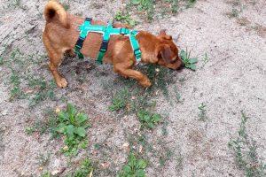 Tag-des-Mischlingshundes-Marudi-2