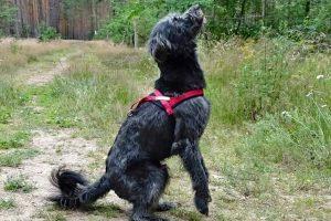 Tag-des-Mischlingshundes-Mossi-1