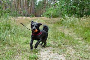 Tag-des-Mischlingshundes-Mossi-2