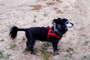 Tag-des-Mischlingshundes-Motte-1