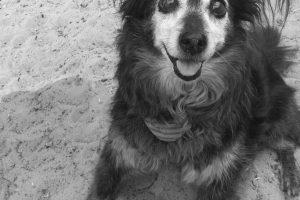 Tag-des-Mischlingshundes-Motte-2