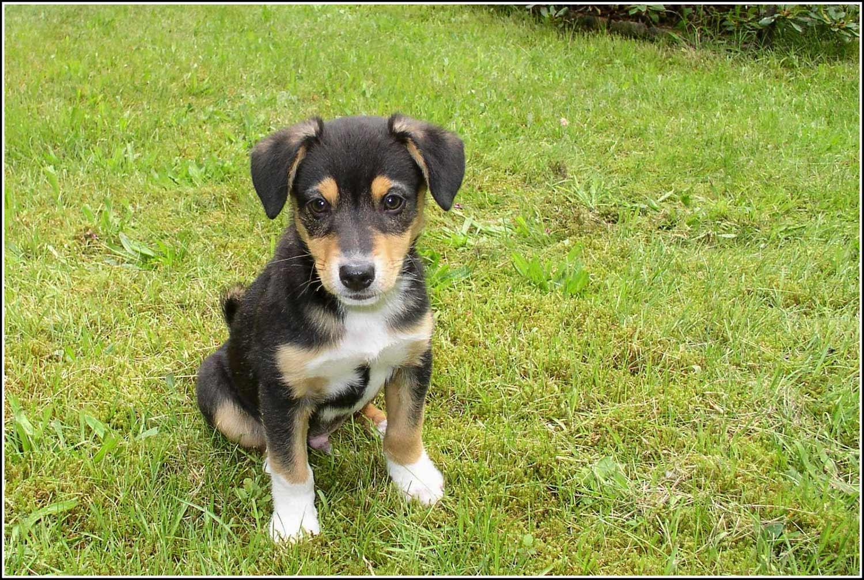 Tag-des-Mischlingshundes