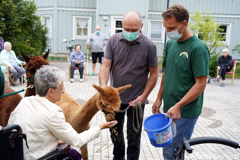 Alpakas in Borkwalde