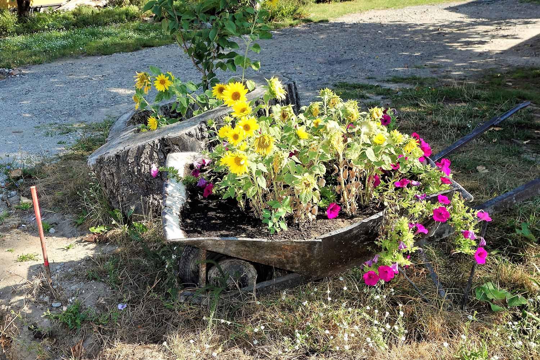 Deetz, Heimatverein Deetz, Deetz mach bunt, Sonnenblumen