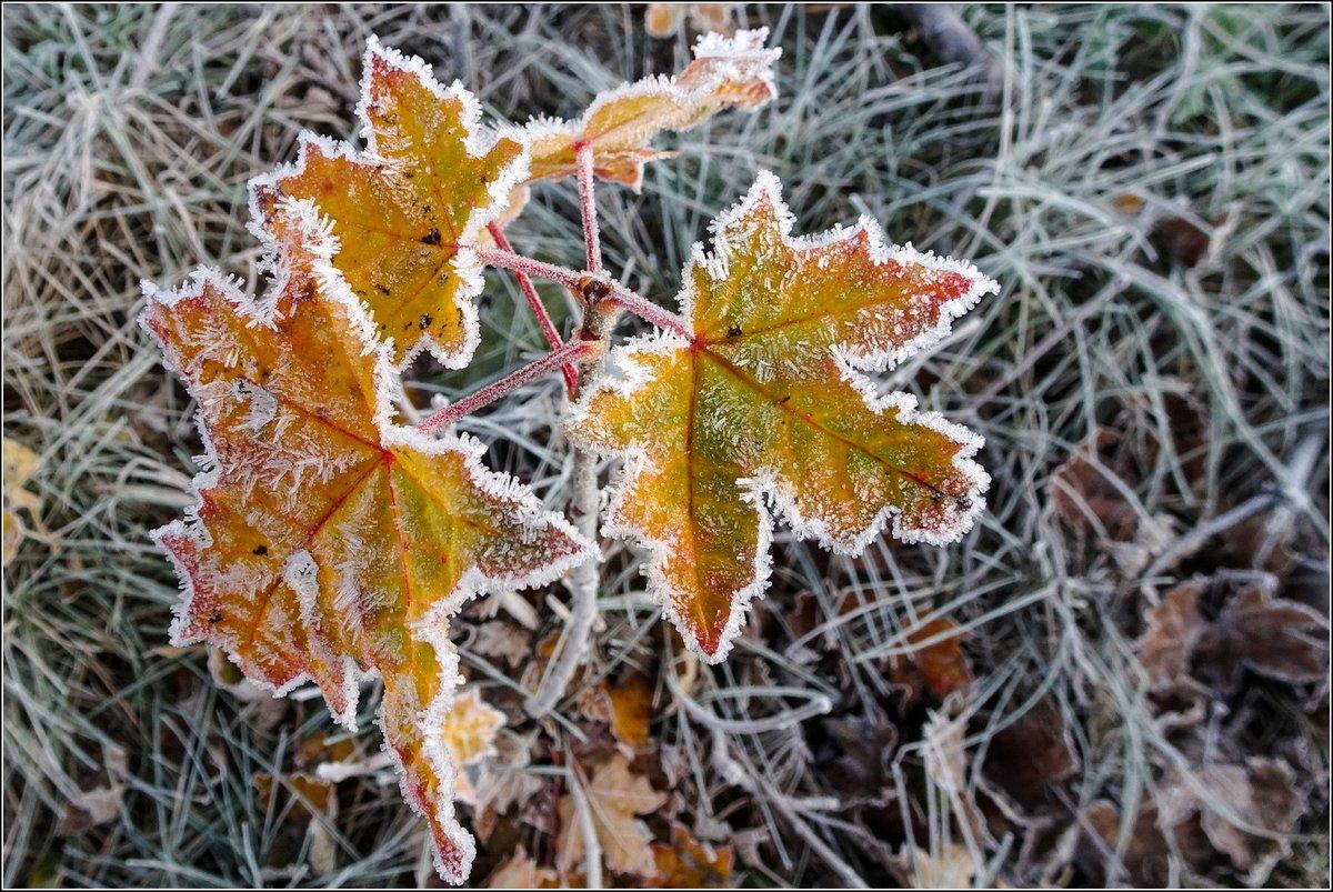 Der Winter hat sich mal kurz vorgestellt