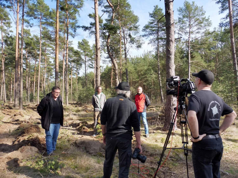 Waldumbau, Borkheide, Setzlinge, Traubeneiche, Borkheide News TV