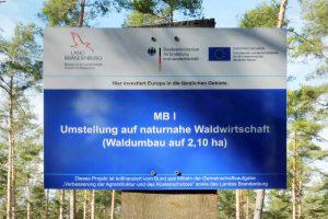 Waldumbau, Borkheide, Setzlinge, Traubeneiche