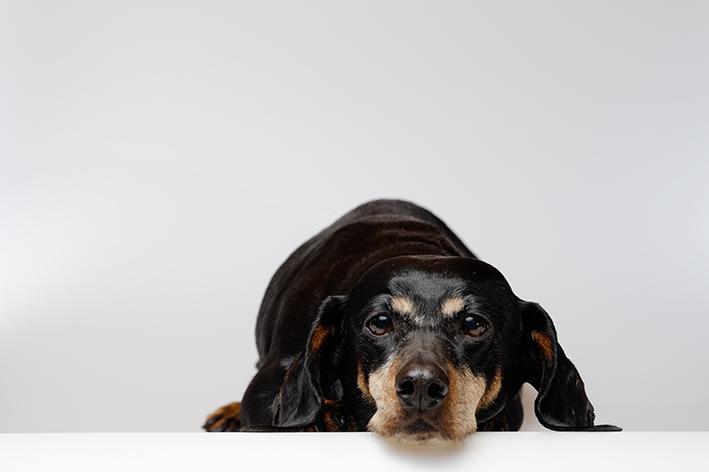 Christian Friedrich: einer meiner Hunde