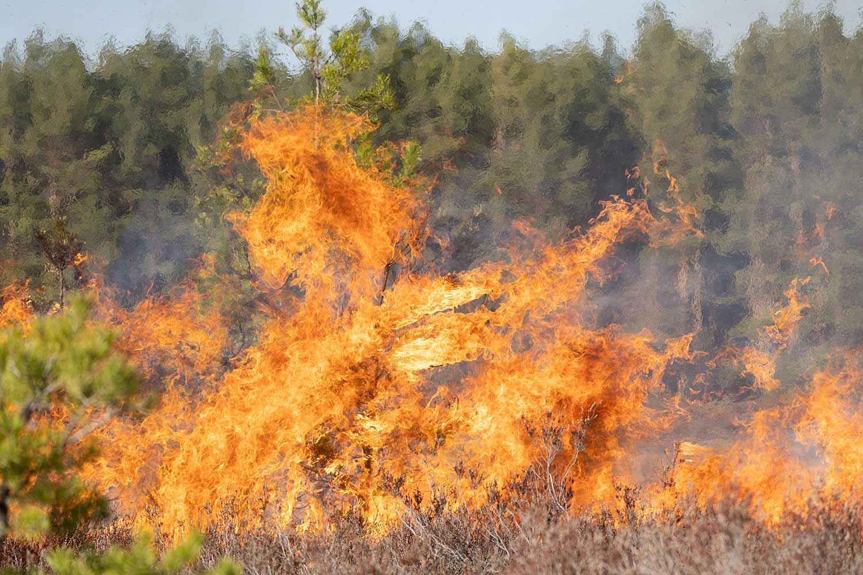 Werbiger-Heide-Flammen-2021-42